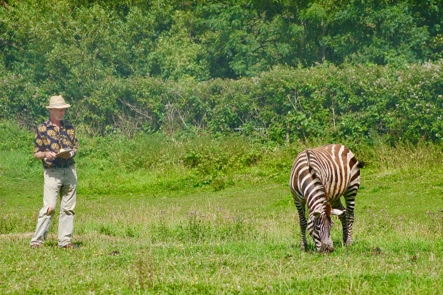 Biologist observes zebra in Britain